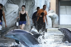 delfini3.jpg