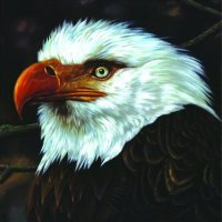 the_hawk_cover