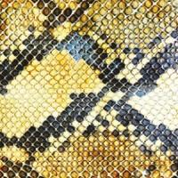 amazing_snakeheads_the_amphetamine_ballads_0414
