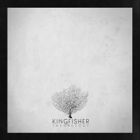 thegreyout_kingfisher